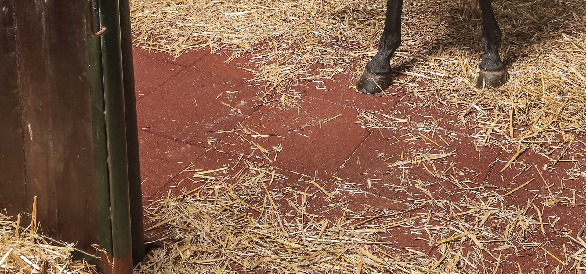 Positive effect of the rubber tiles in horse keeping